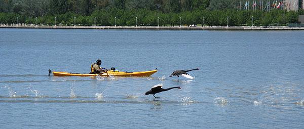 Race on Water
