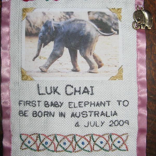 Baby Elephant Luk Chai